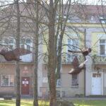 Duże ptaki wykonane zwikliny wisza między drzewami. Wtle budynki
