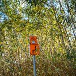 Pomarańczowy drogowskaz zczarną strzałka isymbolem roweru. Wtle zwysokie zielone rośliny