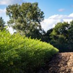 Zielone krzaki izaorane pole, wgłębi drzewa