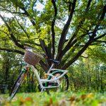 Dwie kobiety Biały rower damski zkoszykiem nazakupy nakierownicy stoi natle wielkiego drzewa