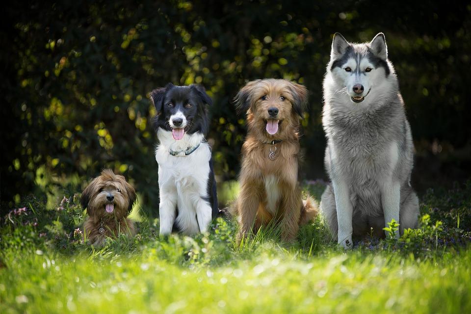 Cztry psy różnych ras iróznej wielkości, siedzą ustawione odnajmniejszego donawiększego